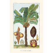The sago palm by Jean-Theodore Descourtilz.  Image from www.thefind.com.